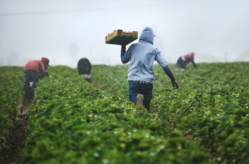 Make the Land Bank work for underprivileged farmers