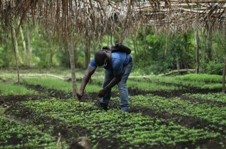 Poor agriculture production exposes region to food insecurity