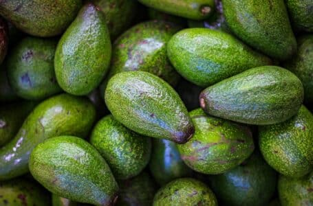 Tanzania to recommence export of Avocado to South Africa after few months of suspension in 2021