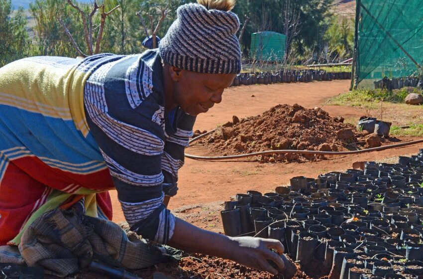 Lesotho relaxes indigenization laws